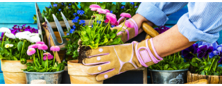 Evde Bitki Yetiştirmenin Püf Noktaları