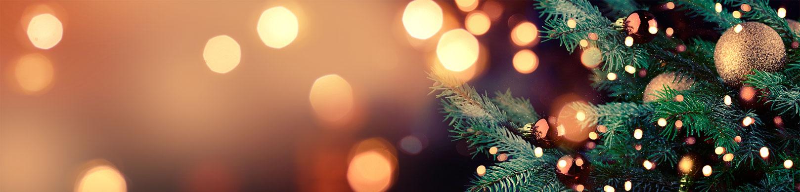 çam ağacı ve ışıklar